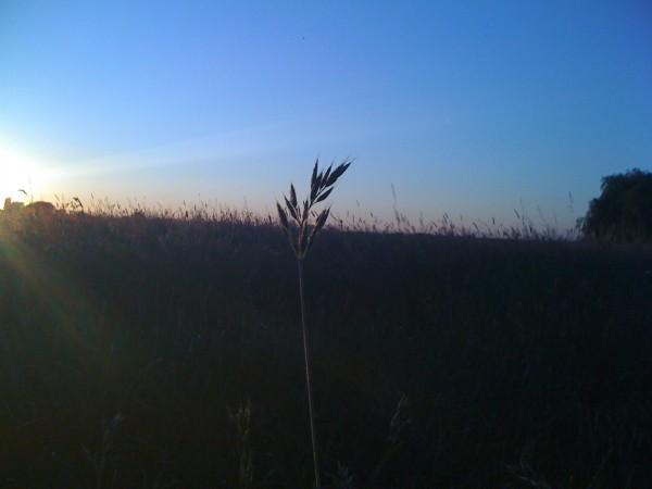 Sonnenuntergang im Feld2