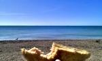 Sea & Sandwich